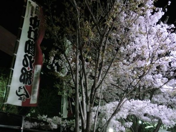 中村座桜1.jpg