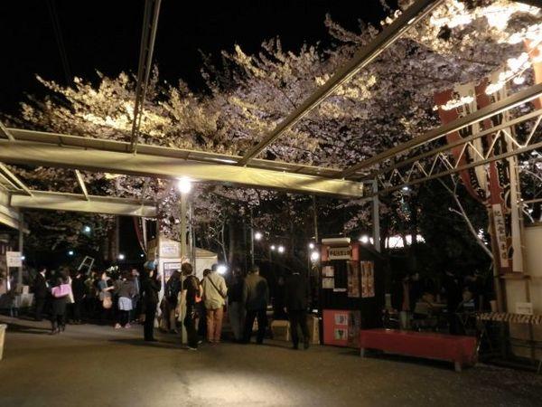 中村座花見1.jpg
