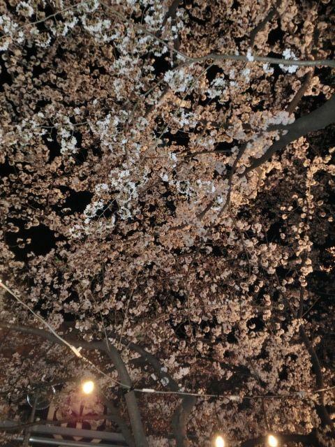 中村座花見3.jpg