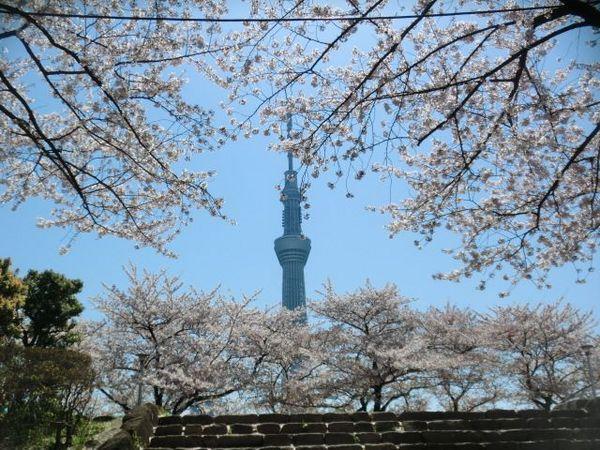 桜とスカイツリー.jpg