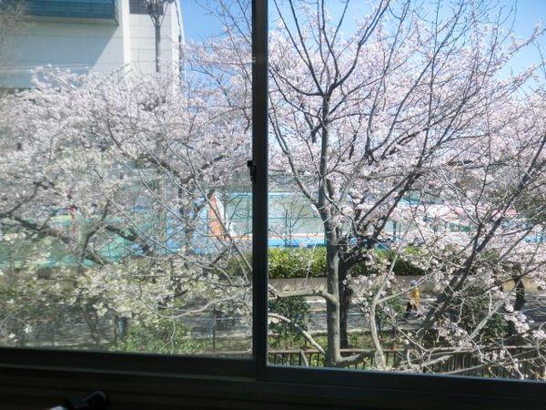 楽屋桜2.jpg